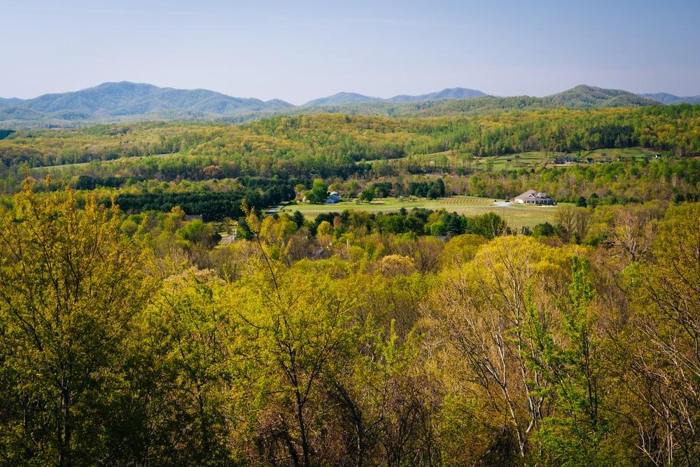 Landscape picture of grassy hills